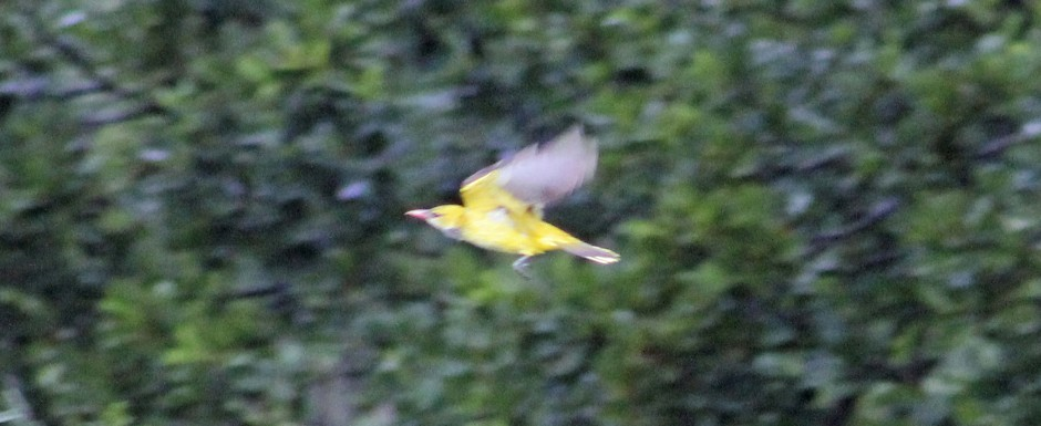 ...and caught in flight