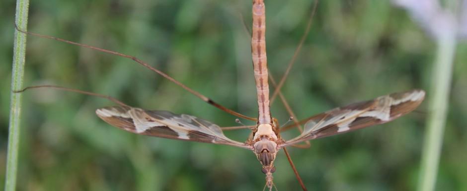 IMG_6057wsmalldragonfly